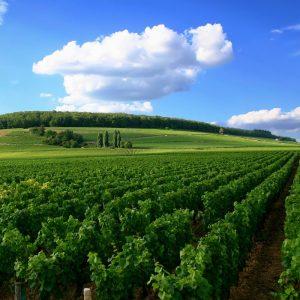 Domaine des Terres Dorées, Bourgogne