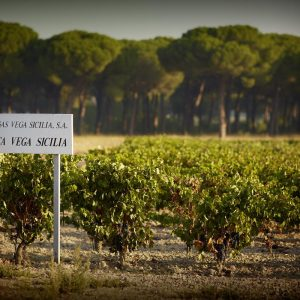 Vega Sicilia and Pintia